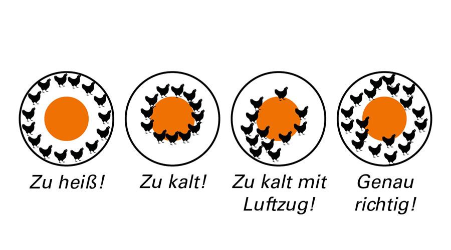 Vier kreisförmige Bilder mit unterschiedlicher Kükenanordnung
