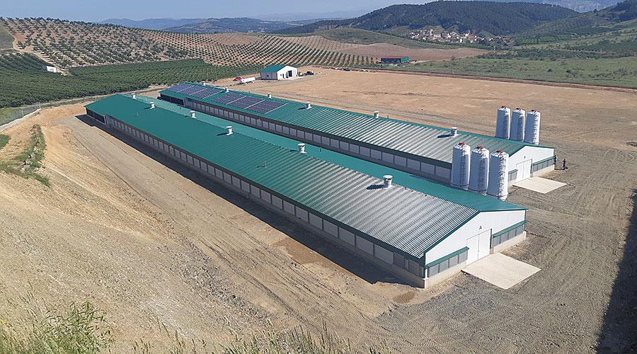 Stallgebäude für die Hähnchenmast mit Photovoltaikanlage