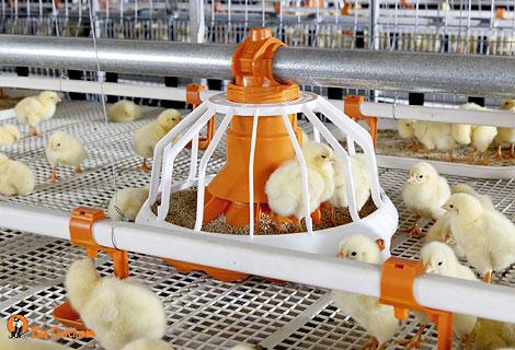Дополнительные субсидии на поддержку производителей мяса птицы